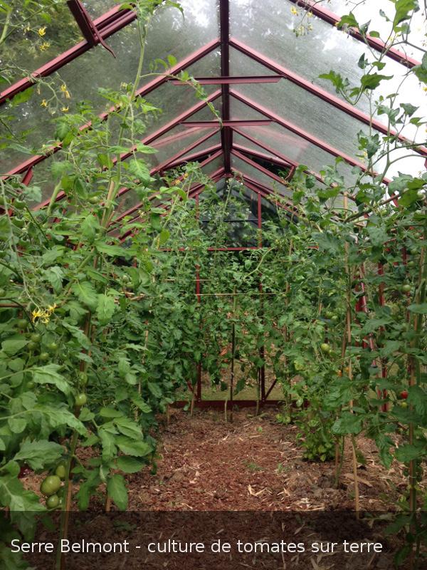 Serre anglaise avec cultures de tomates